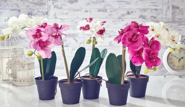 Орхидея в доме - сильный женский талисман