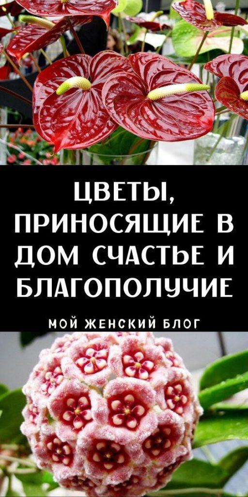 Цветы, приносящие в дом счастье и благополучие