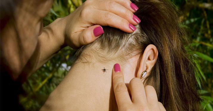 4 совета как правильно и безопасно защититься от клещей