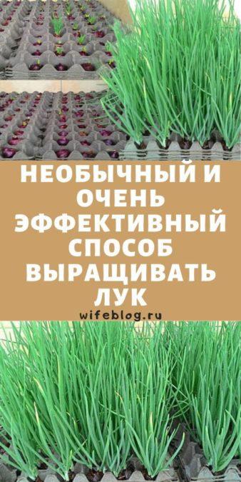 Необычный и очень эффективный способ выращивать лук