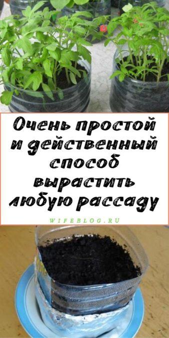 Очень простой и действенный способ вырастить любую рассаду